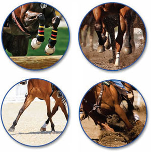 nutritional requirements for specific horses It's been 18 years since the national research council (nrc) revised its nutrient  requirements for horses – a manual widely used by equine.